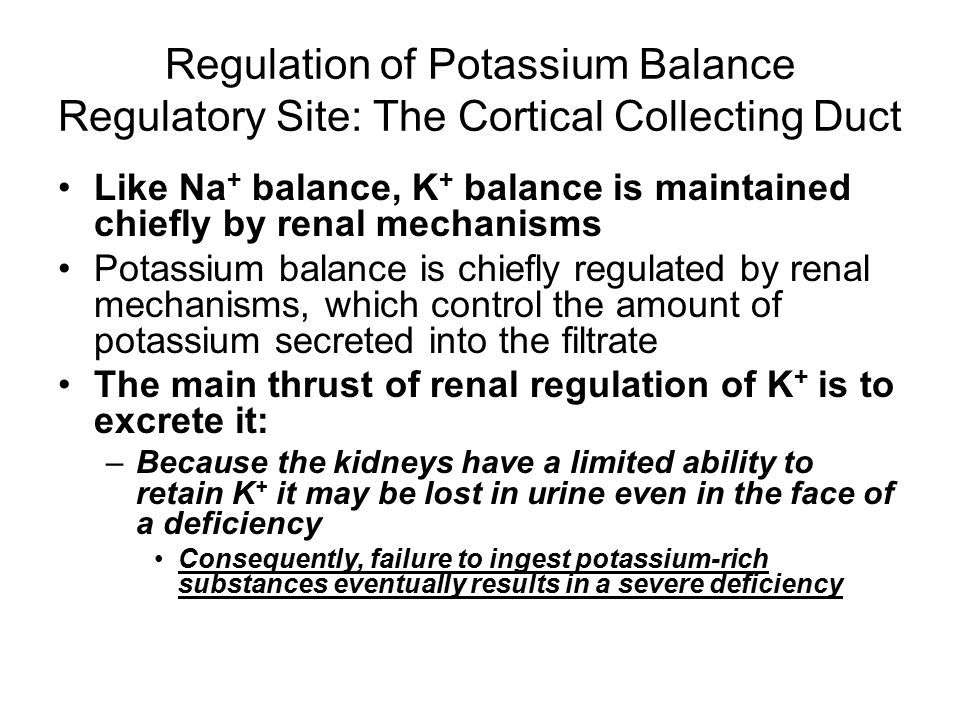 Regulation of Potassium Balance Regulatory Site: The Cortical Collecting Duct
