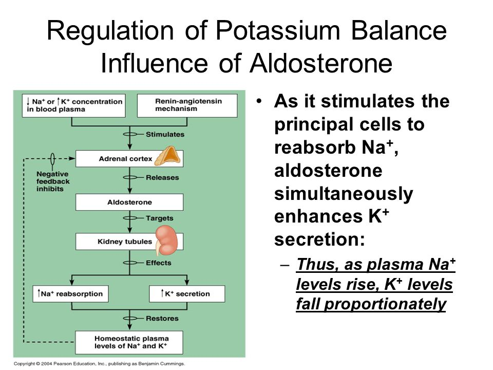 Regulation of Potassium Balance Influence of Aldosterone