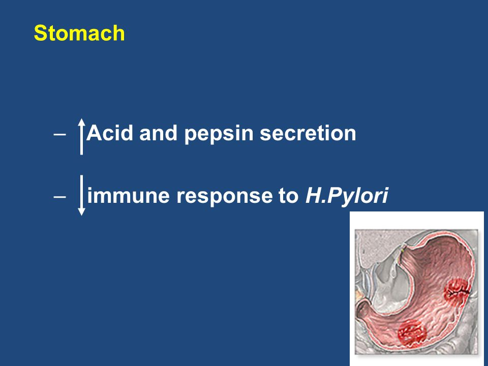 Stomach Acid and pepsin secretion immune response to H.Pylori
