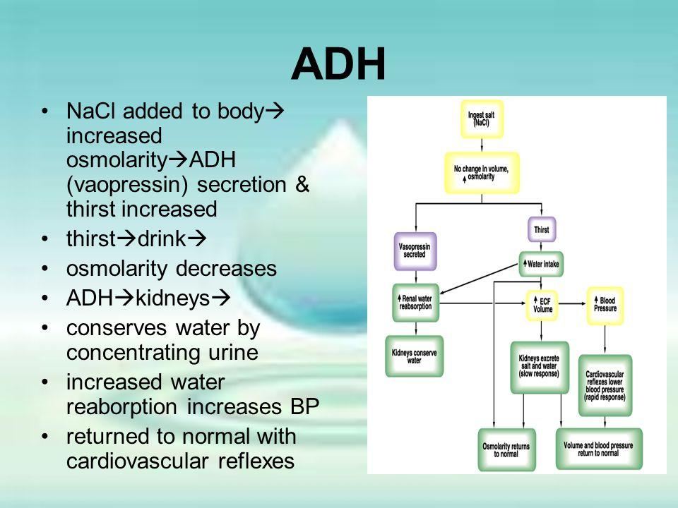 ADH NaCl added to body increased osmolarityADH (vaopressin) secretion & thirst increased. thirstdrink