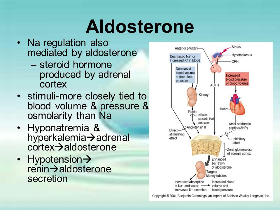 Aldosterone Na regulation also mediated by aldosterone