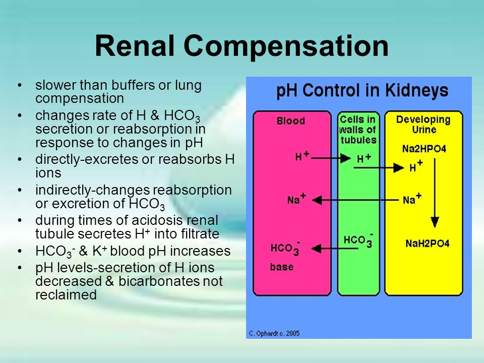 Renal Compensation slower than buffers or lung compensation