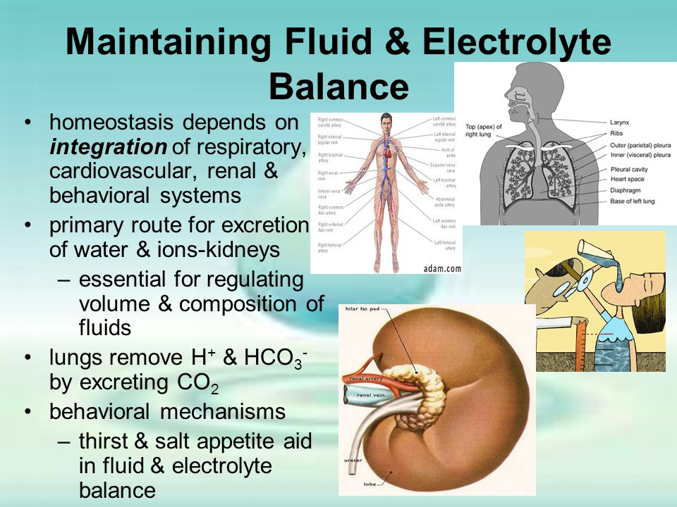 Maintaining Fluid & Electrolyte Balance