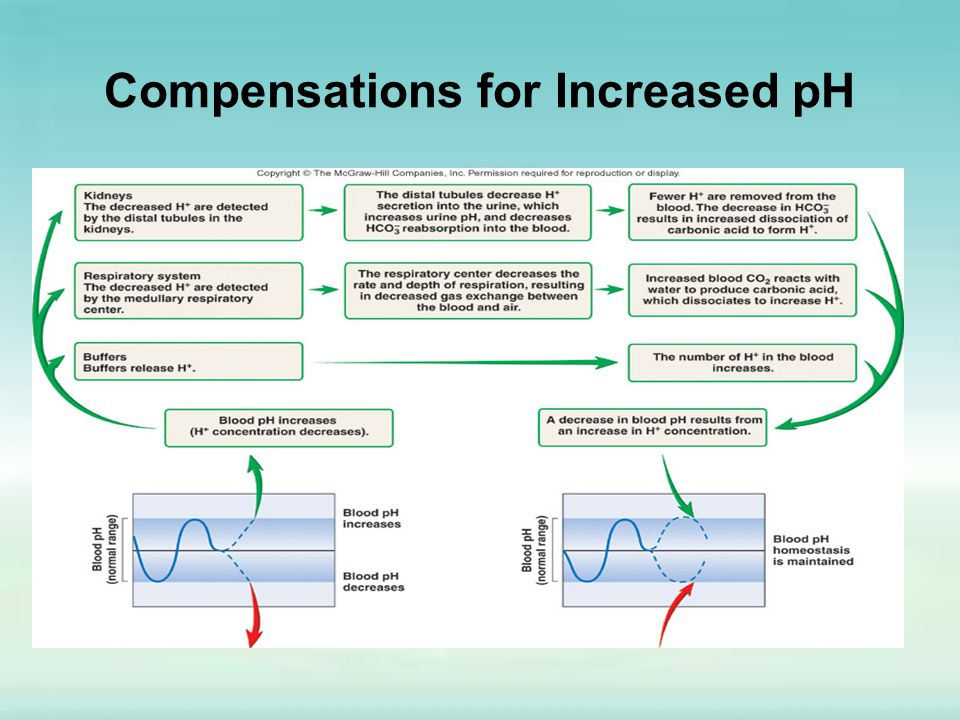 Compensations for Increased pH