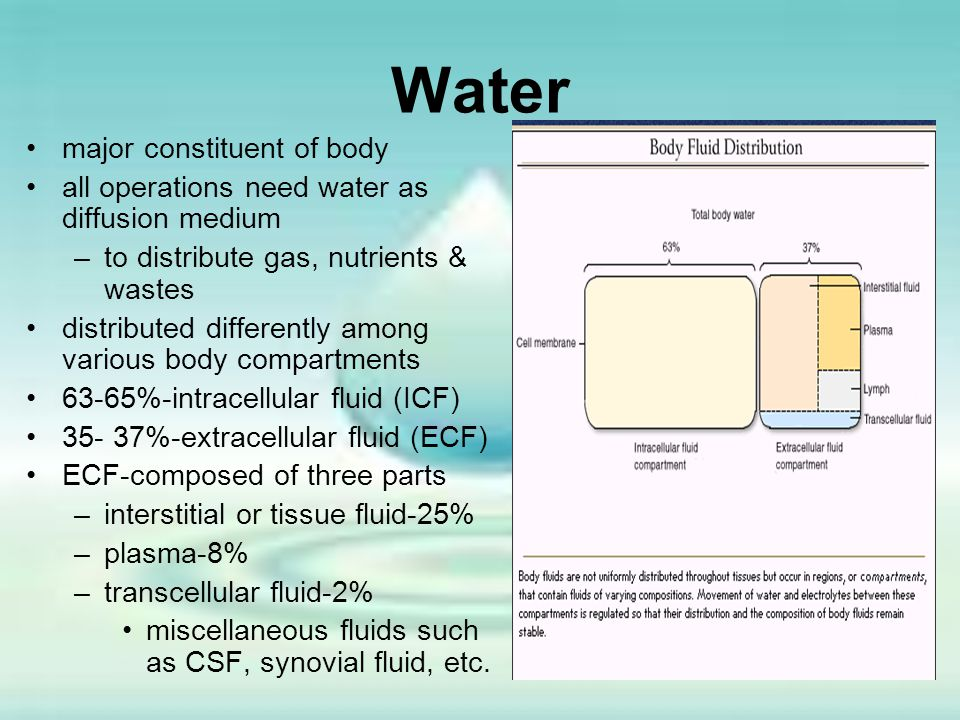 Water major constituent of body