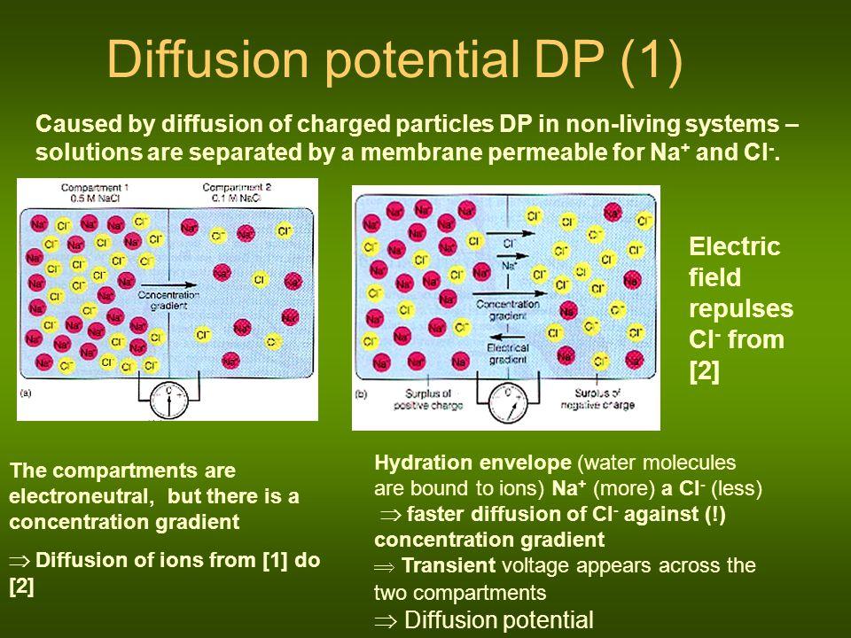 Diffusion potential DP (1)