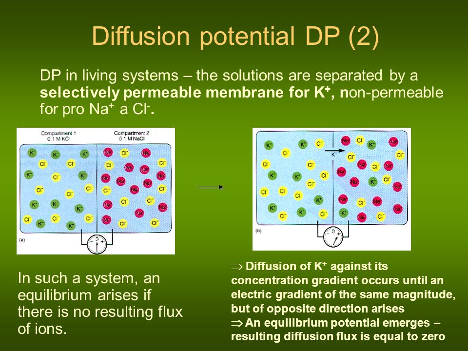 Diffusion potential DP (2)