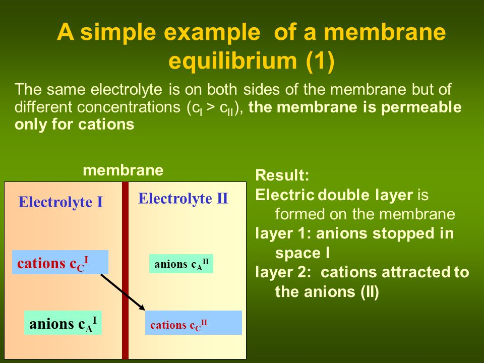 A simple example of a membrane equilibrium (1)