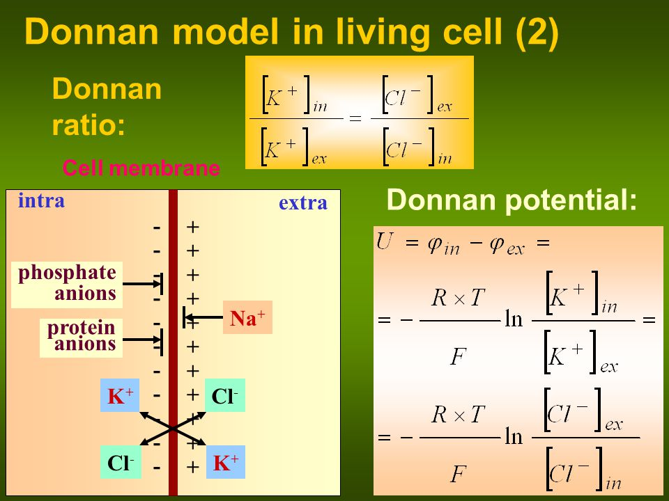 Donnan model in living cell (2)