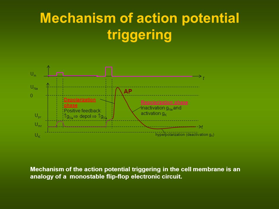 Mechanism of action potential triggering