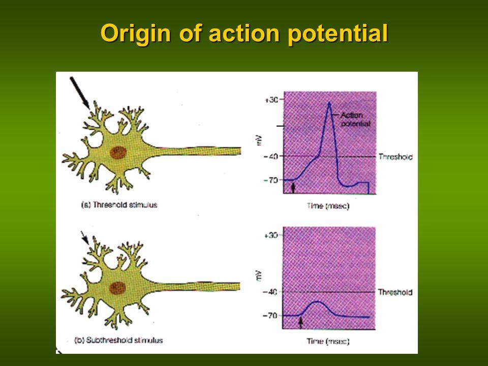 Origin of action potential