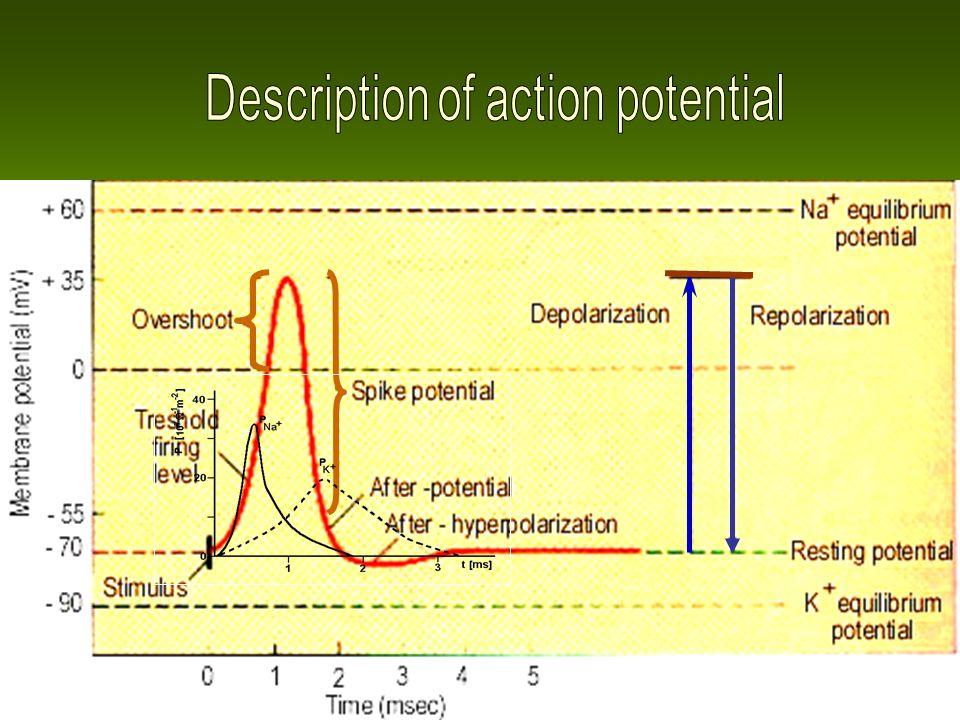 Description of action potential