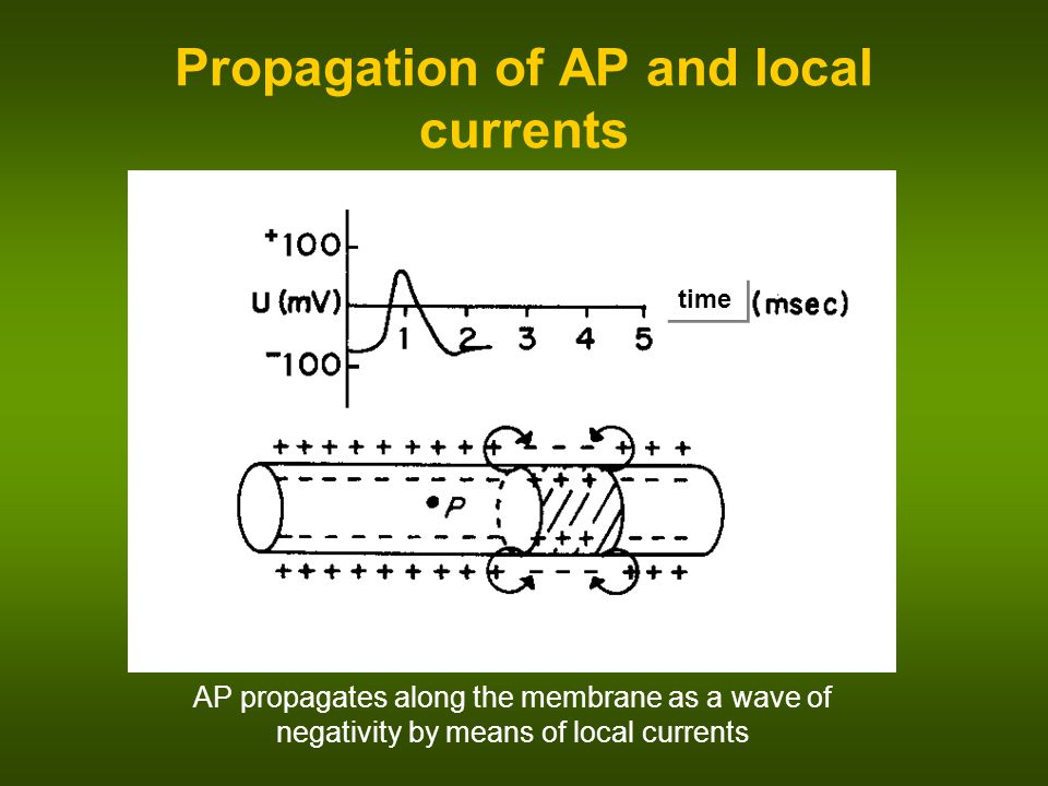 Propagation of AP and local currents