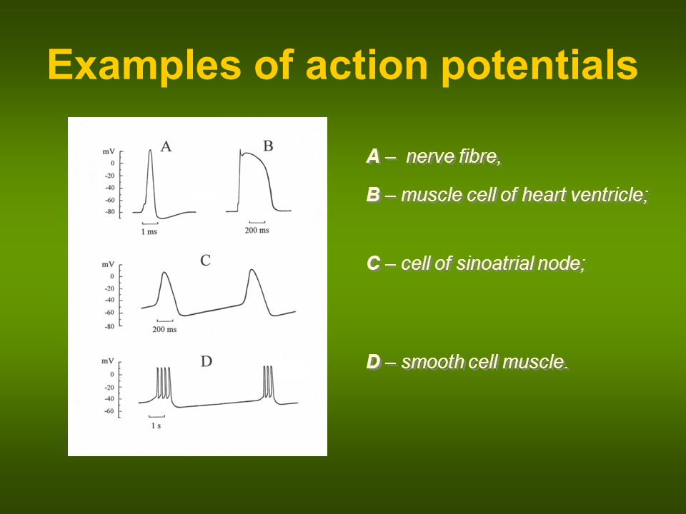 Examples of action potentials