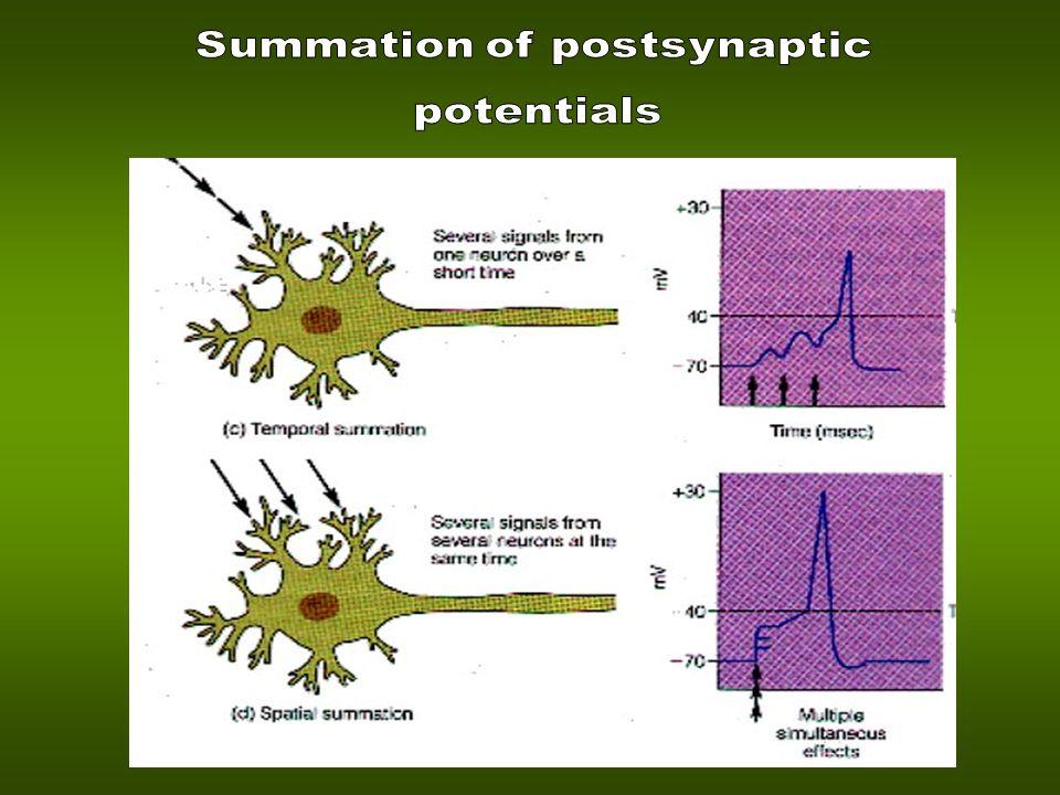 Summation of postsynaptic