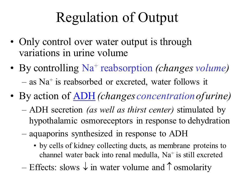 Regulation of Output Only control over water output is through variations in urine volume. By controlling Na+ reabsorption (changes volume)