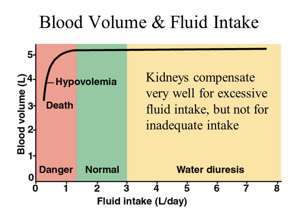 Blood Volume & Fluid Intake