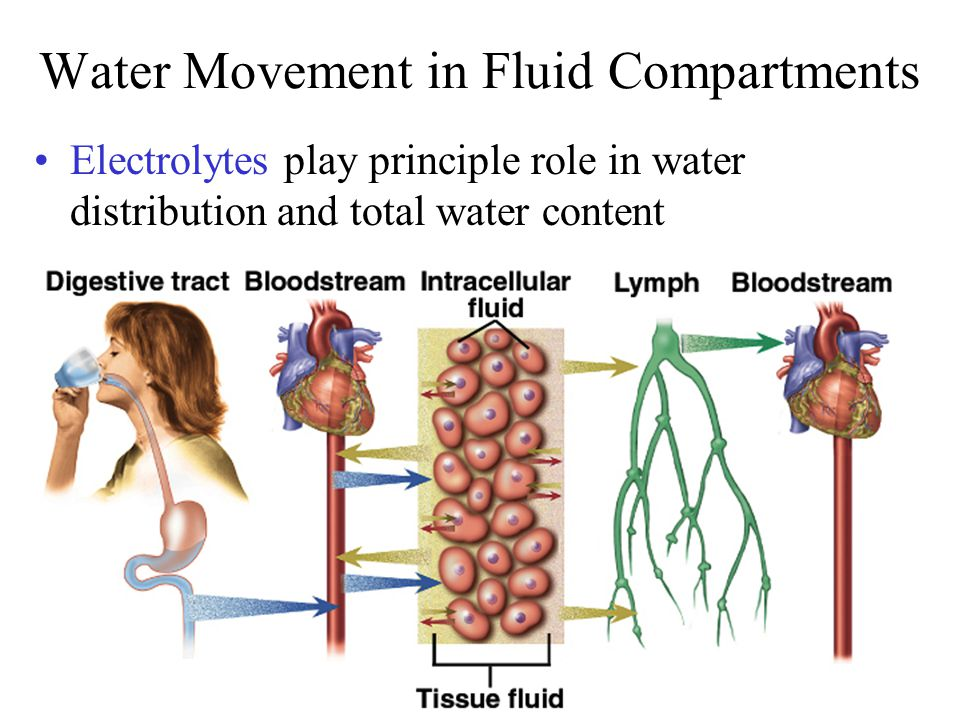 Water Movement in Fluid Compartments