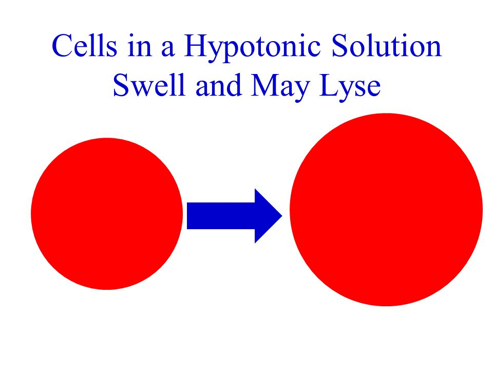 Cells in a Hypotonic Solution Swell and May Lyse