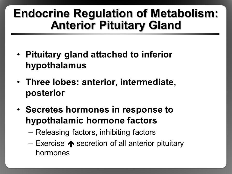 Endocrine Regulation of Metabolism: Anterior Pituitary Gland