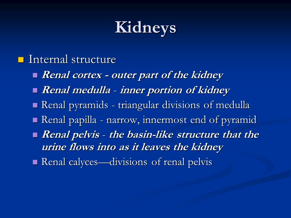 Kidneys Internal structure Renal cortex - outer part of the kidney