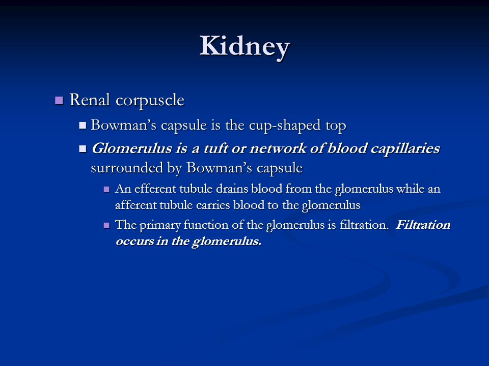 Kidney Renal corpuscle Bowman's capsule is the cup-shaped top