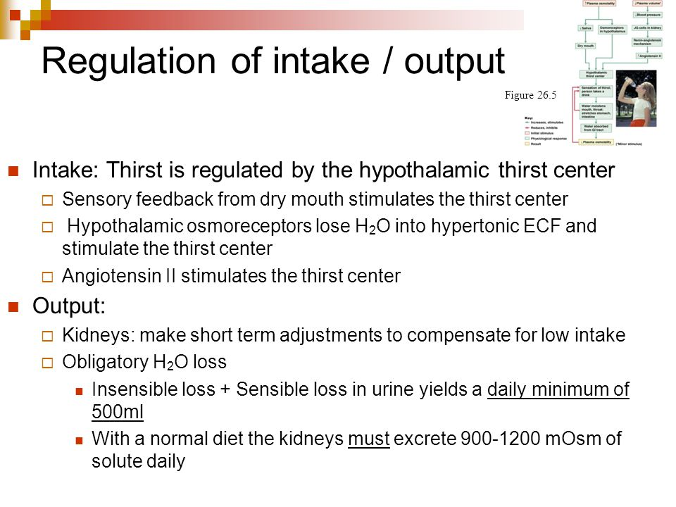 Regulation of intake / output