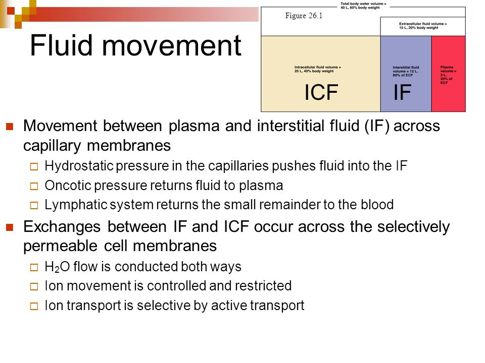 Figure 26.1 Fluid movement. ICF. IF. Movement between plasma and interstitial fluid (IF) across capillary membranes.