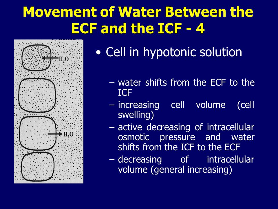 Movement of Water Between the ECF and the ICF - 4