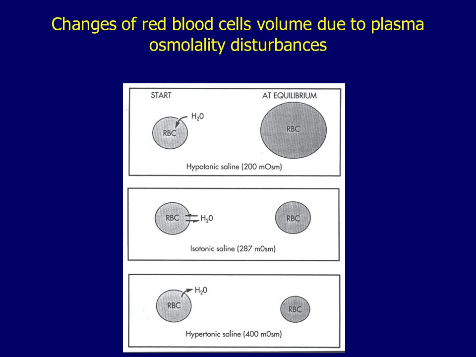 Changes of red blood cells volume due to plasma osmolality disturbances