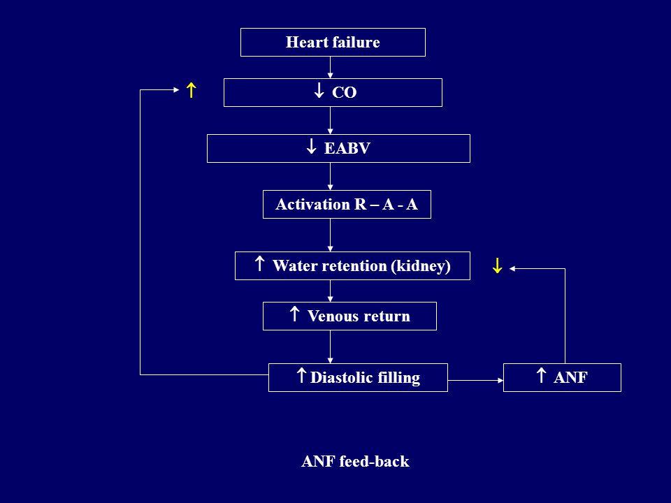  Water retention (kidney)