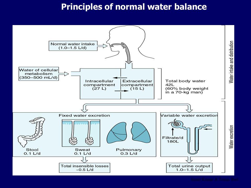 Principles of normal water balance