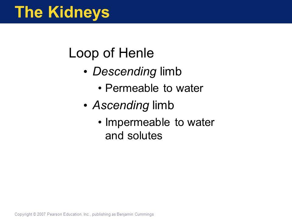The Kidneys Loop of Henle Descending limb Ascending limb