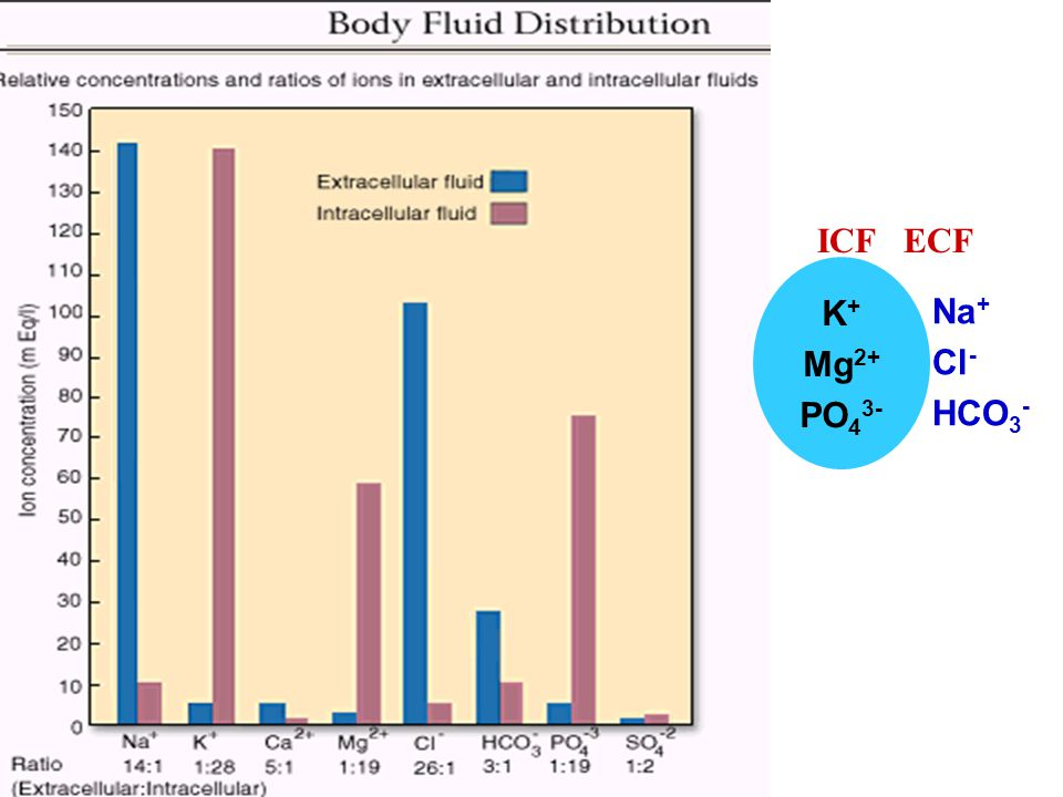 K+ Mg2+ PO43- Na+ Cl- HCO3- ICF ECF
