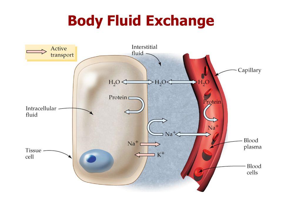 Body Fluid Exchange