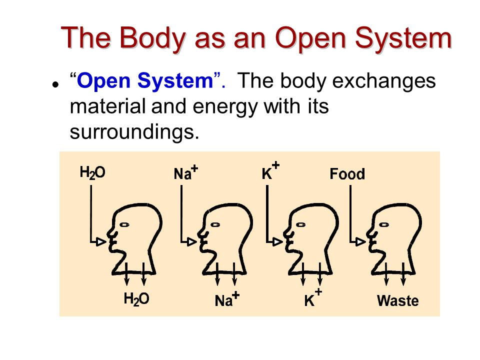 The Body as an Open System