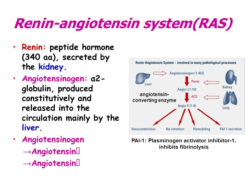 Renin-angiotensin system(RAS)