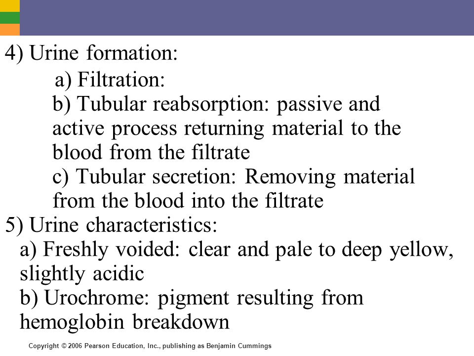 4) Urine formation: a) Filtration: b) Tubular reabsorption: passive and active process returning material to the blood from the filtrate.