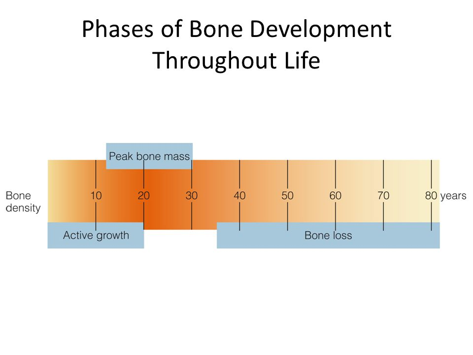 Phases of Bone Development Throughout Life
