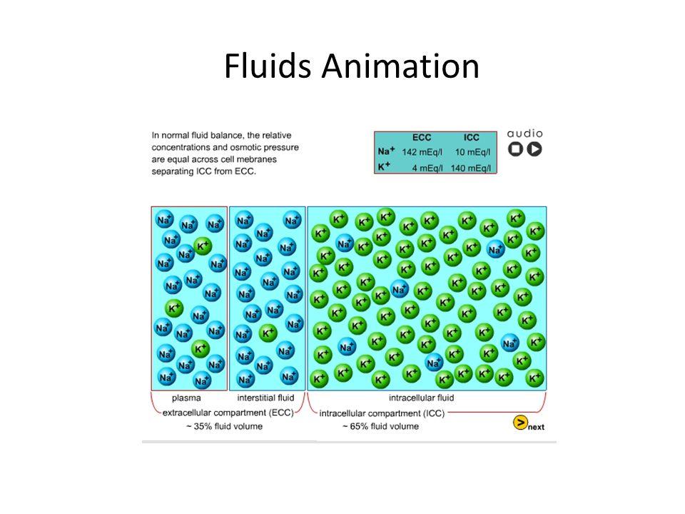 Fluids Animation