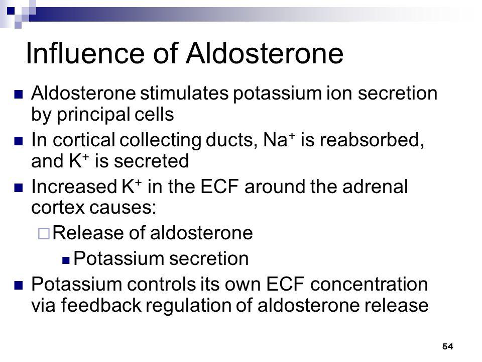 Influence of Aldosterone