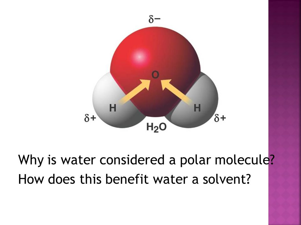 Why is water considered a polar molecule