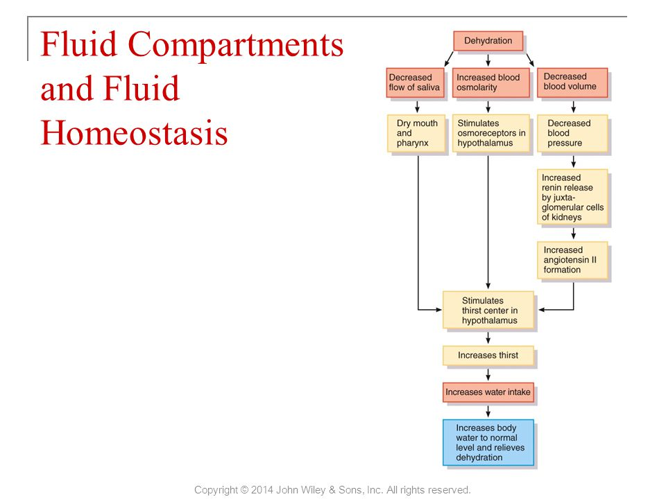 Fluid Compartments and Fluid Homeostasis