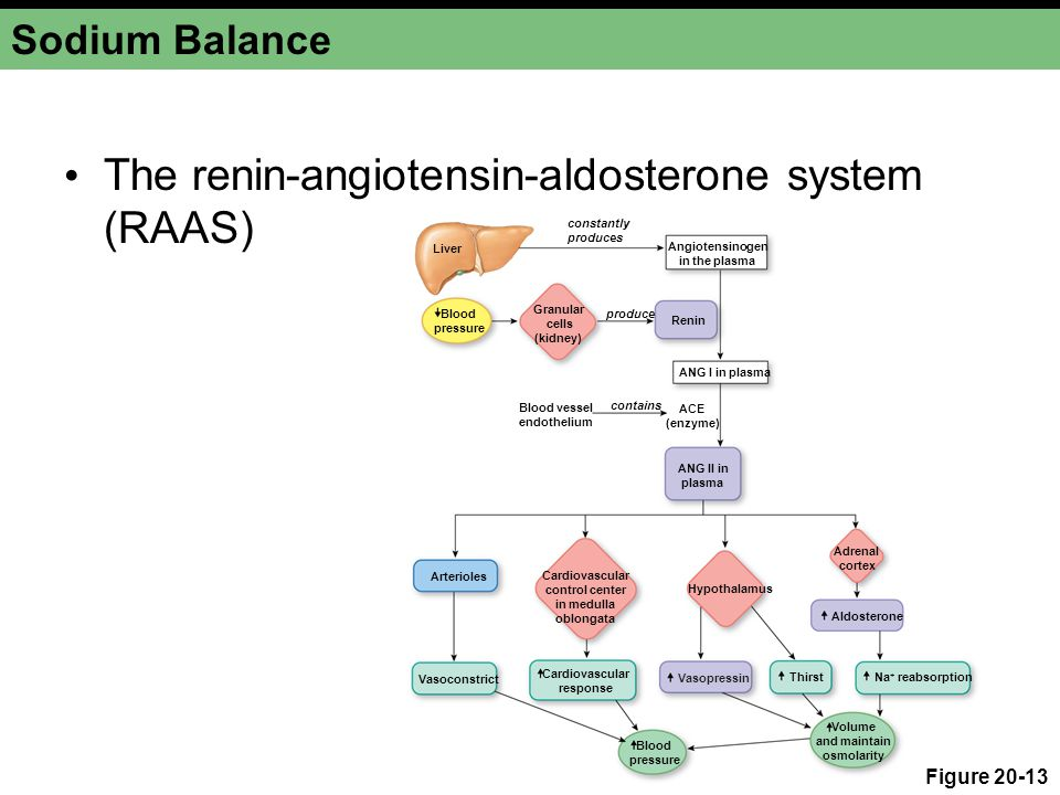 The renin-angiotensin-aldosterone system (RAAS)