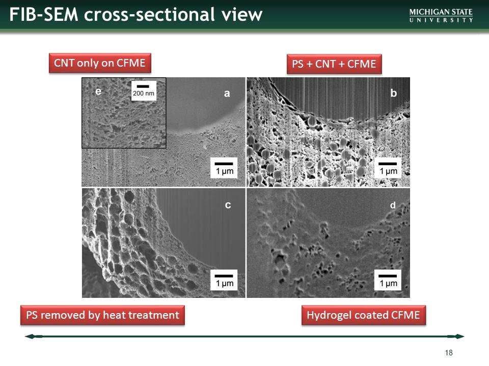 FIB-SEM cross-sectional view