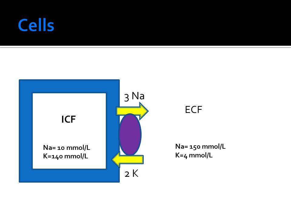 Cells 3 Na 2 K ECF ICF Na= 10 mmol/L K=140 mmol/L Na= 150 mmol/L