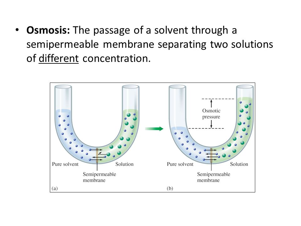 Osmosis: The passage of a solvent through a semipermeable membrane separating two solutions of different concentration.