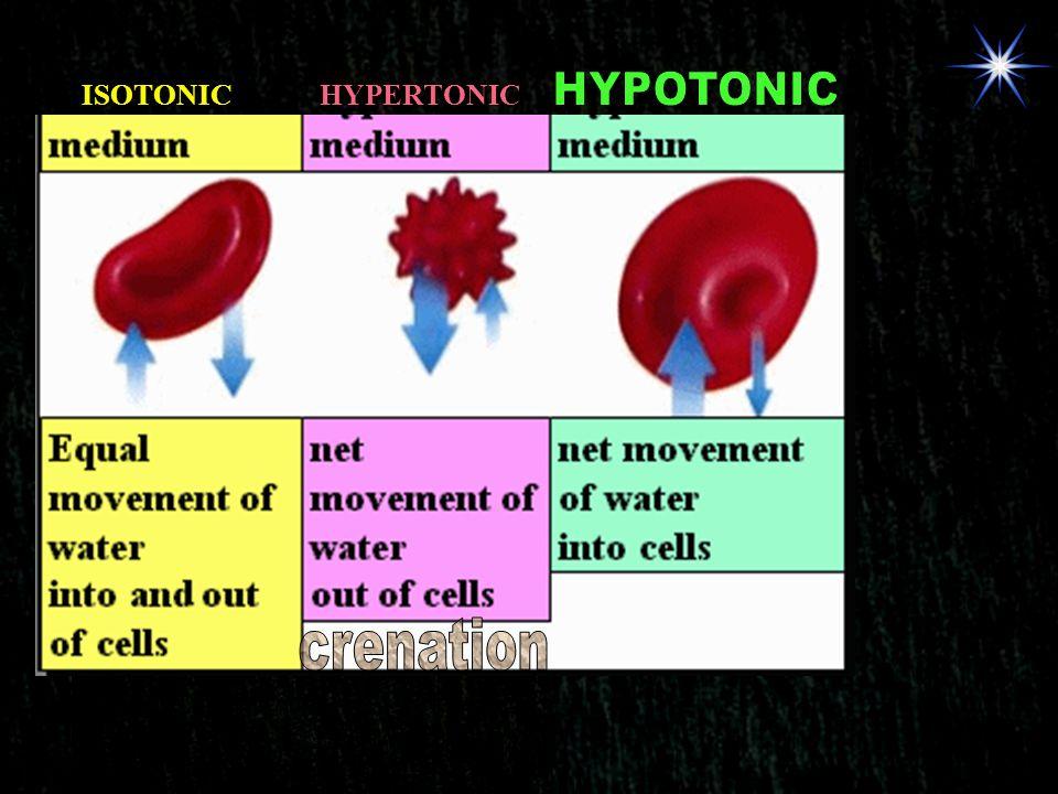 ISOTONIC HYPERTONIC HYPOTONIC crenation