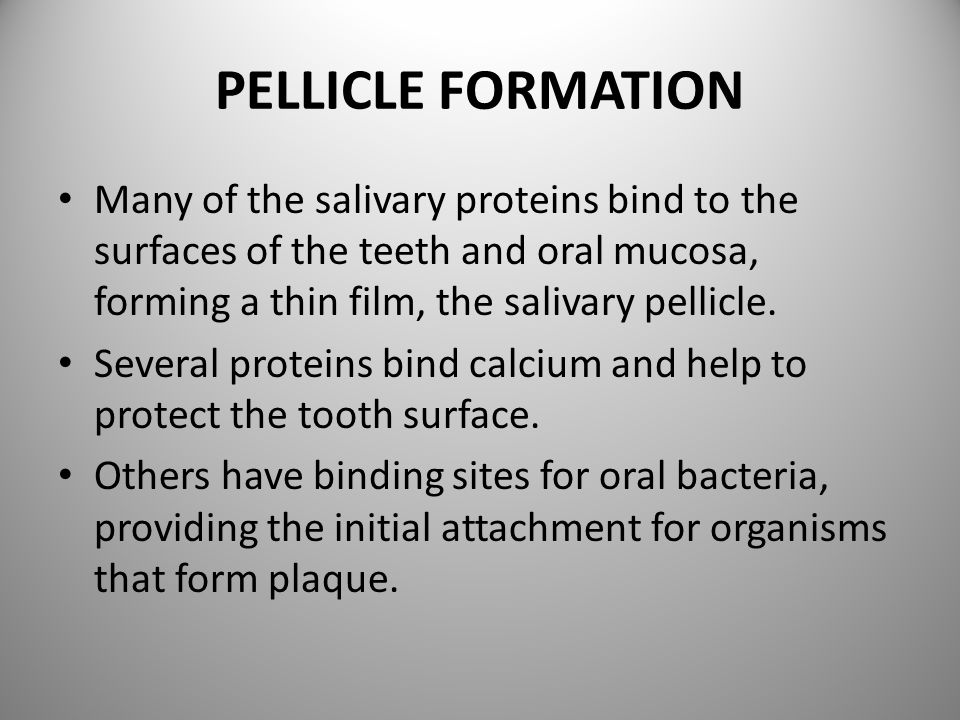 PELLICLE FORMATION Many of the salivary proteins bind to the surfaces of the teeth and oral mucosa, forming a thin film, the salivary pellicle.