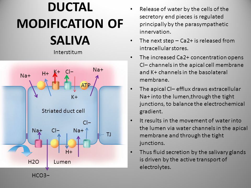 DUCTAL MODIFICATION OF SALIVA
